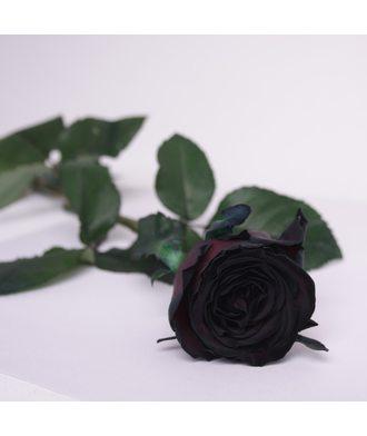 Чёрная роза