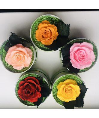 Роза в коробочке (стаб. цветы)